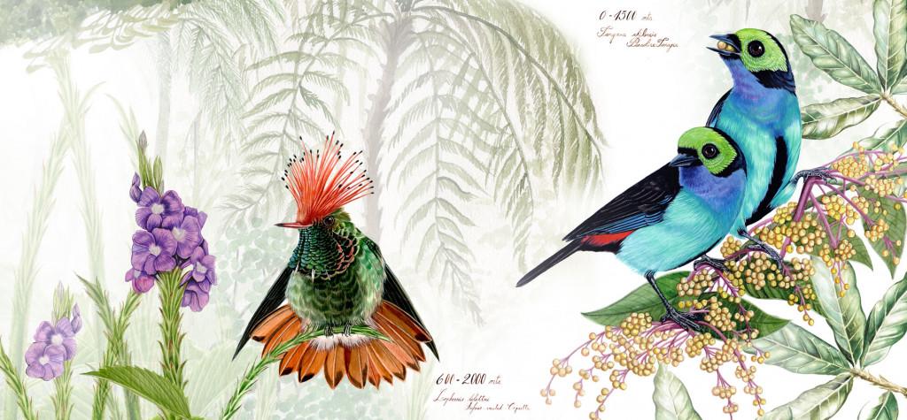 colibri-chilensis-fondo-fio-2020